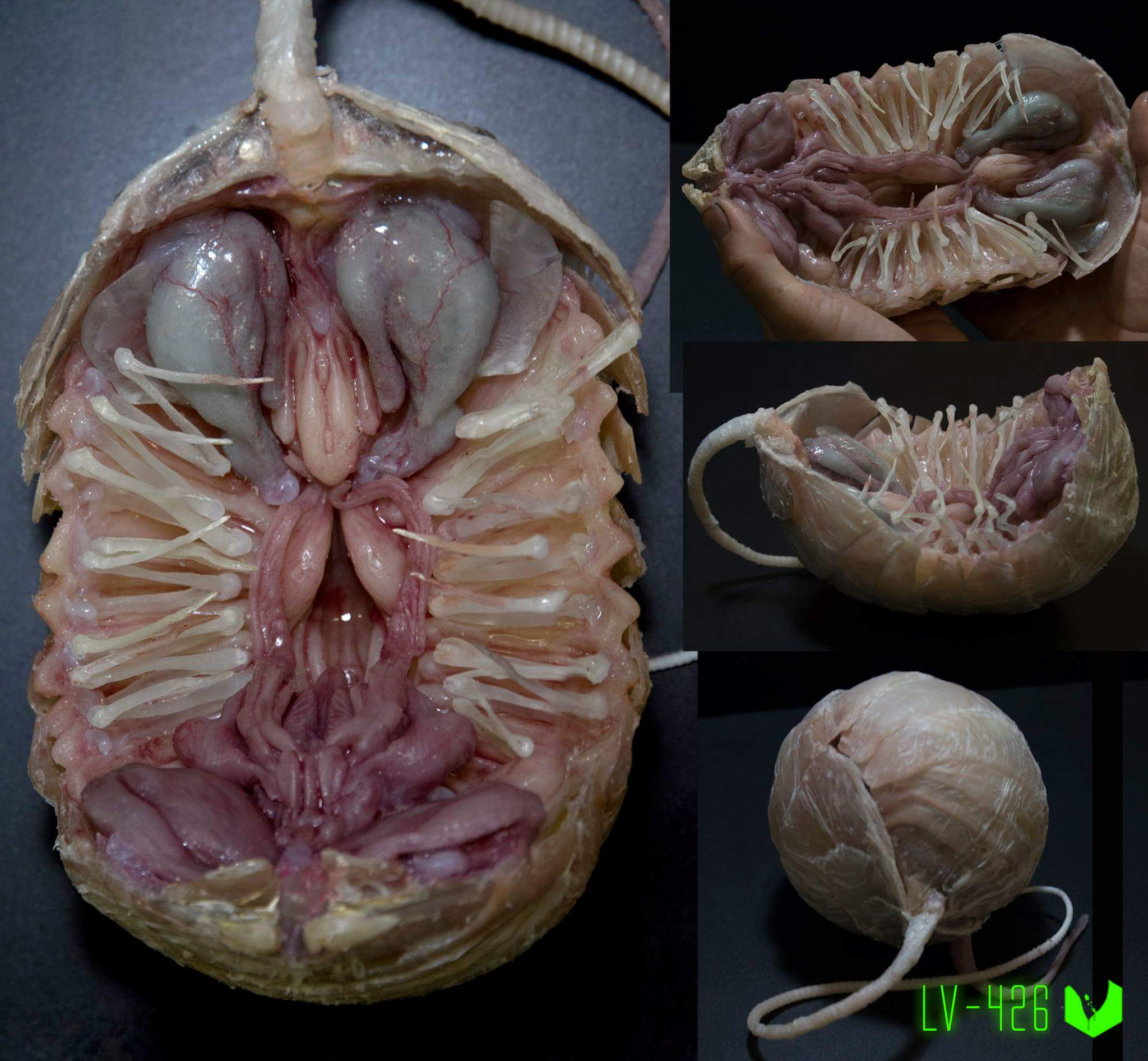 Proto-Facehugger Alien: Covenant | Прото-лицехват Чужой Завет